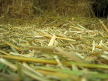 Straw scene Royalty Free Stock Image