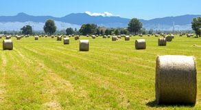 Straw Sheafs. In the Padania plain and view of the Appennini mountains, near Modena, Italy Royalty Free Stock Image