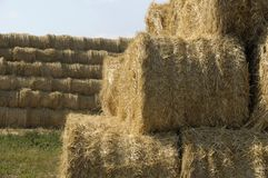 Straw sheaves Stock Image