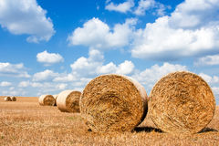 Straw sheaves on the field Royalty Free Stock Photography