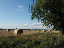 Straw in sheaves of summer in the field, mown grain stock photo