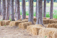 Straw sheaves under the  tree Royalty Free Stock Image