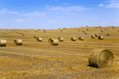 Straw stack.  harvesting Stock Photos