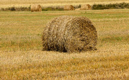 Straw stack Royalty Free Stock Photo