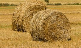 Straw stack Stock Image