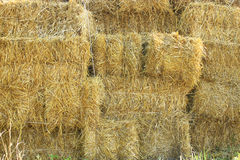 Straw stacked in bales Stock Photography