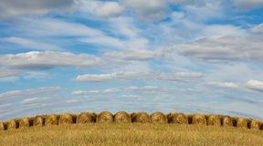 Straw stacks on the field Stock Image