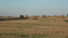 Straw stacks on harvested field and old oak shadow in evening. Straw stacks on harvested farmland field and old oak shadow in evening stock footage