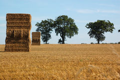 Straw stacks and trees horizon Stock Images