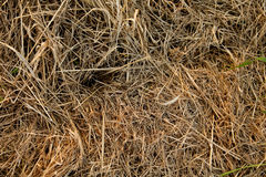 Straw structure Royalty Free Stock Image