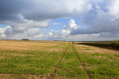 Straw stubble in autumn Stock Images