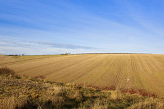 Straw stubble in autumn Stock Image
