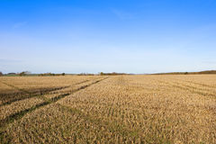 Straw stubble in autumn Royalty Free Stock Photo