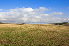 Straw stubble and cloudy sky. An extensive straw stubble field in rolling hills at harvest time in the yorkshire wolds under a blue cloudy sky Royalty Free Stock Photography