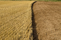 Straw stubble and cultivated earth soil on farm field Stock Image