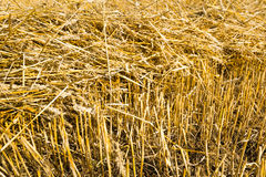 Straw on the stubble  field from close Royalty Free Stock Photos