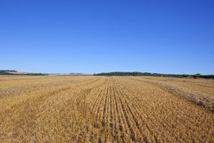 Straw stubble field Royalty Free Stock Photography