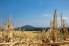 Straw stubble on field Royalty Free Stock Photography