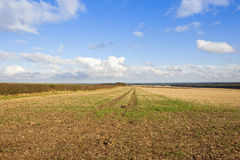 Straw stubble field Royalty Free Stock Photo