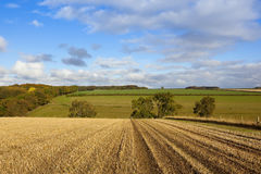 Straw stubble and woodland Stock Image