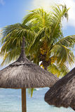 Straw sunshade under palm tree Royalty Free Stock Images