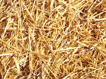Straw. The surface of a straw bale in close-up as background Stock Image