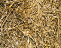 Straw texture Stock Photography