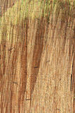 Straw texture. The closeup of straw texture Stock Image