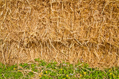Straw texture. In a pile of straw texture background stock image