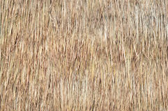 Straw texture. The dried straw wall texture for design Royalty Free Stock Image