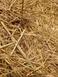 Straw texture. The interiori of one of the straw bales seen in a field after the harvest stock images