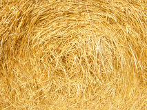 Straw texture. Background, close up royalty free stock photo