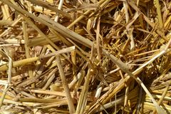 Straw texture as an autumn nature background. A close-up beautiful view to straw heap texture as an autumn natural background in a sunny day stock image