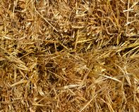 Straw texture as an autumn nature background. A close-up beautiful view to straw heap texture as an autumn natural background in a sunny day royalty free stock images