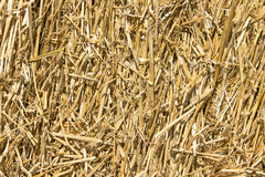 Straw texture. As a background royalty free stock photos