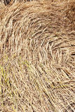 Straw texture background. Close - up stock photos