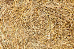 Straw texture background Stock Images