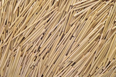 Straw texture background. Dried straw stems texture background royalty free stock photos
