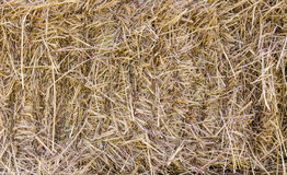 Straw texture for background.  stock images