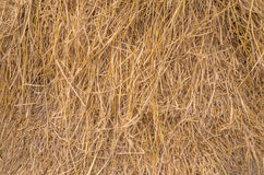 Straw texture for background.  royalty free stock photography