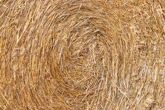 Straw texture for the background. Close-up. Abstract natural pattern. Straw texture for the background. Abstract natural pattern stock images