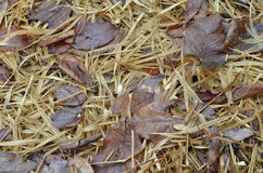 Straw texture background, close up. Straw and hay texture background stock image