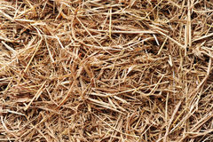 Straw texture background. Straw detail of texture background royalty free stock photos