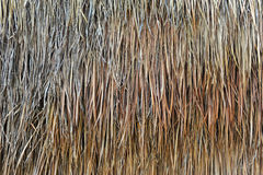 Straw texture background. Dried straw texture of background stock photos