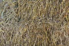 Straw texture background. Straw, dry straw texture background royalty free stock images