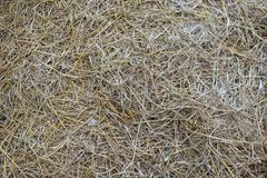 Straw texture background. Straw, dry straw texture background royalty free stock photo