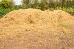 Straw texture background. Farm Dry Straw texture background royalty free stock photo