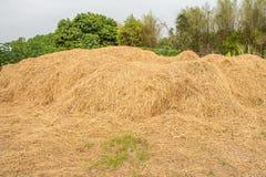 Straw texture background. Farm Dry Straw texture background royalty free stock photos