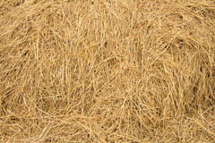 Straw texture background. Farm Dry Straw texture background royalty free stock photography