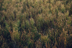 Straw texture background. Flora grass stock photos